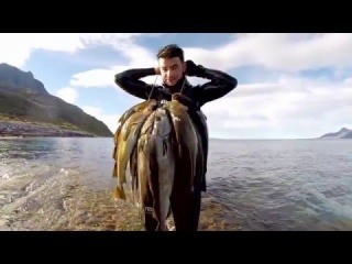 Spearfishing in Northern Norway 2015 HD (long version)
