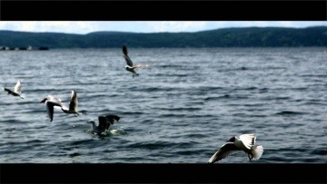 DOMIKA - SUMMERTIME LOVE (Official Music Video)