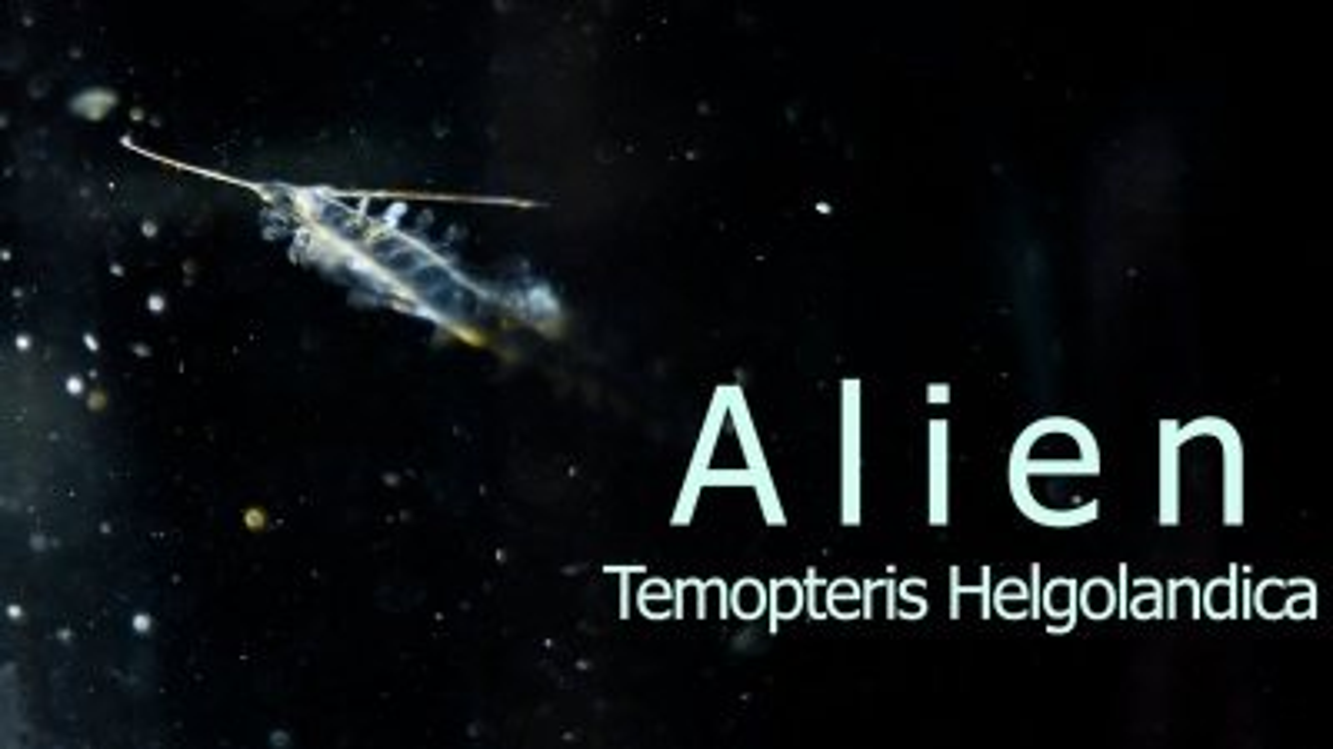 """Znalazłem """"aliena"""" i zrobiłem o nim mini dokumencik przyrodniczy."""