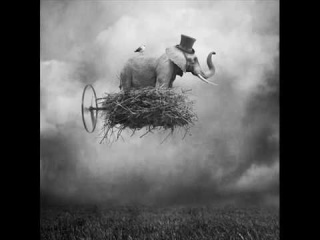 Coccolino Deep - Don't forget to fly