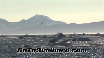 Go To Svalbard Summer 2014