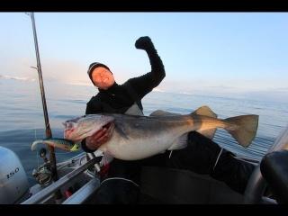 Fiskeri efter Skrei fra øen Sørøya i det norlige Norge