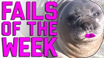 Fails of the Week: Yes We Did (January 2017) || FailArmy