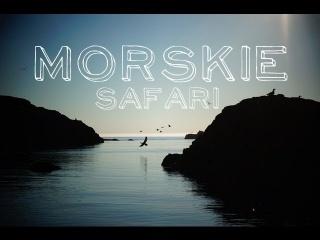 Morskie safari, Norwegia | Podróżne #76